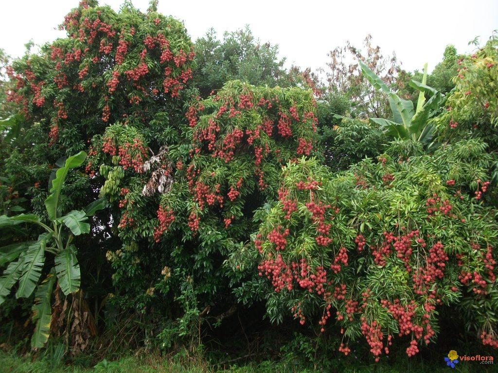 vue-d-ensemble-de-la-plante-visoflora-45471