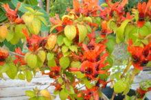 Balboa_Park_Plant_Picsi_11_15_09_073